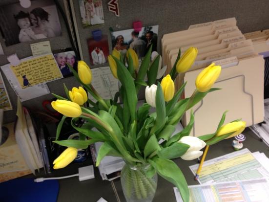 Yellow and White Tulips
